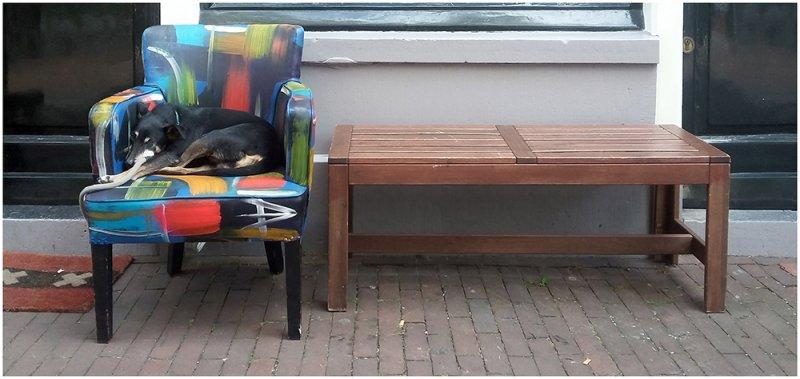 02_HelenWitte_Amsterdam-hondje-op-stoelSmall